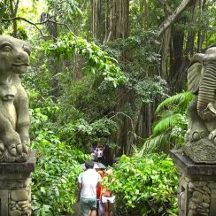 ¿Qué ver en Bali? Monkey Forest